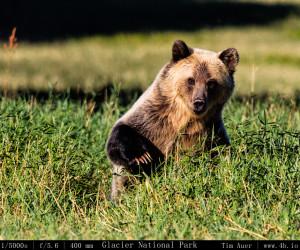 Bears Gallery - 4b.io Nature (12)