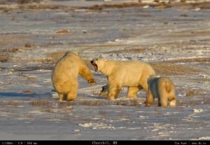 Bears Gallery - 4b.io Nature (13)