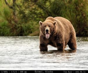 Bears Gallery - 4b.io Nature (14)