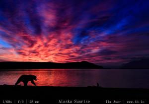 Bears Gallery - 4b.io Nature (15)