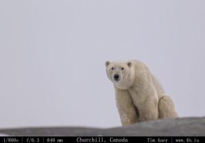 Bears Gallery - 4b.io Nature (17)