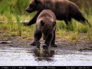 Bears Gallery - 4b.io Nature (18)
