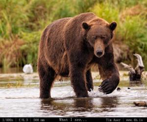 Bears Gallery - 4b.io Nature (19)