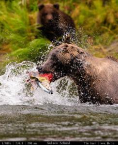 Bears Gallery - 4b.io Nature (29)