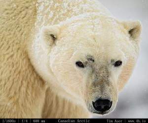 Bears Gallery - 4b.io Nature (3)