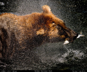 Bears Gallery - 4b.io Nature
