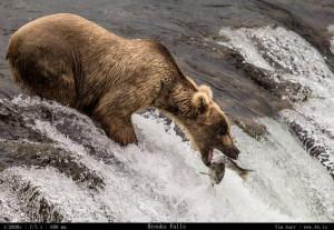 Bears Gallery - 4b.io Nature (4)