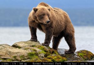 Bears Gallery - 4b.io Nature (7)