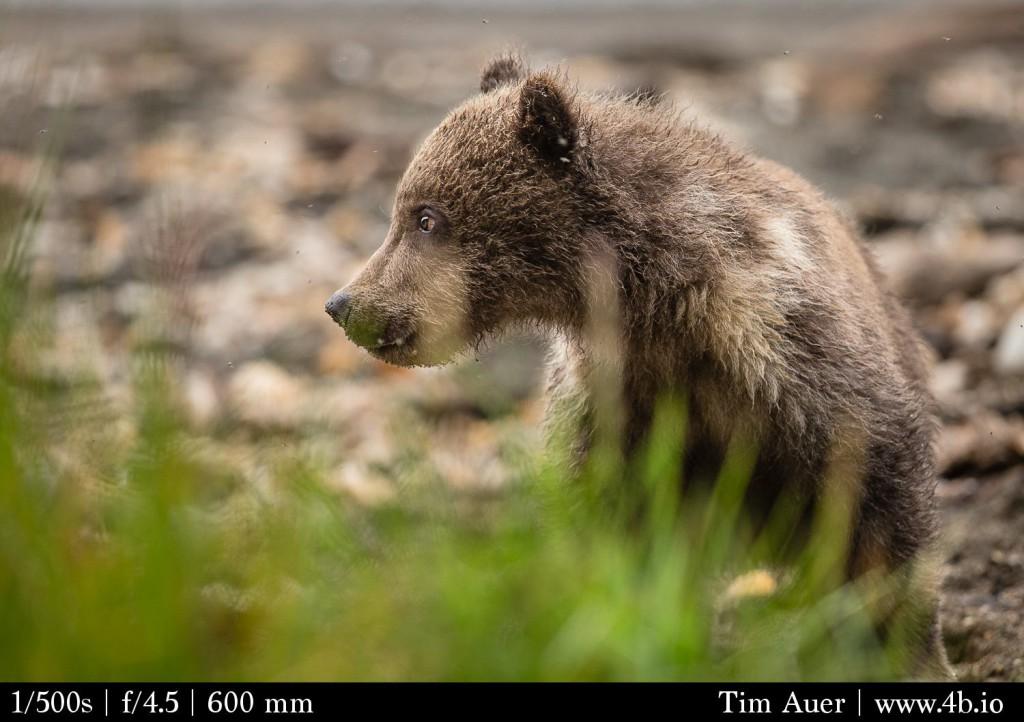Cub Profile